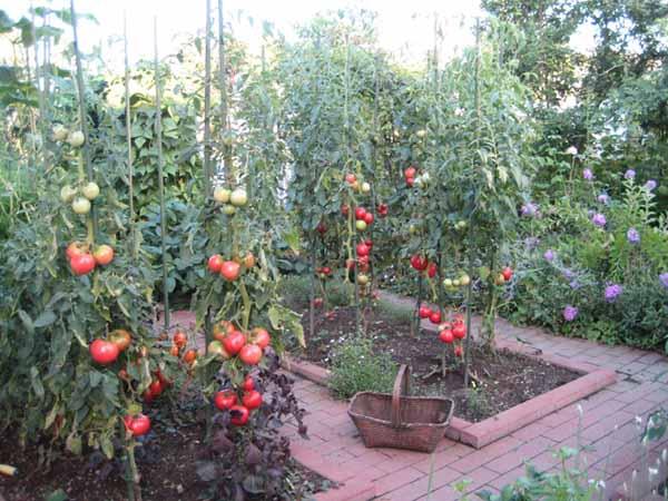 Как украсит сад огород своими руками фото 703