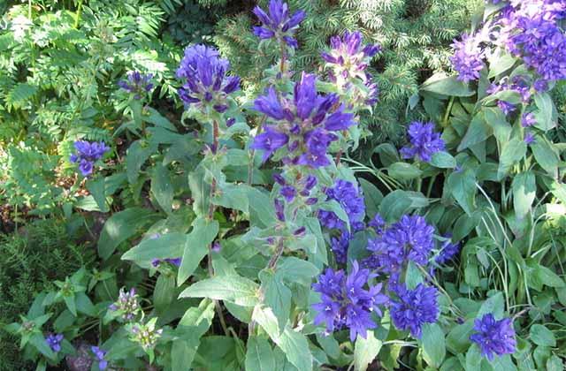 альпийская горка растения