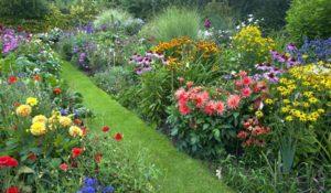 клумба, которая цветет все лето