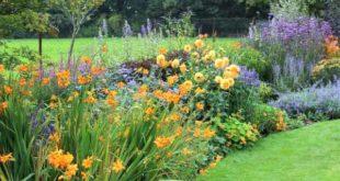 клумбы цветущие все лето