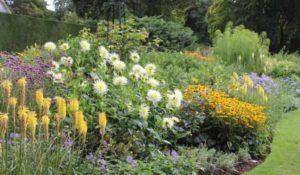 многолетние цветы для клумбы цветущие все лето