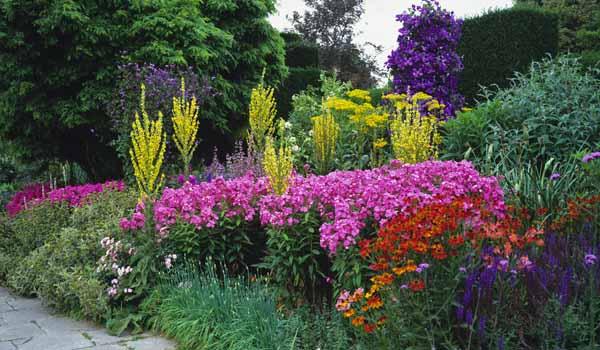 как составить клумбу цветущую все лето