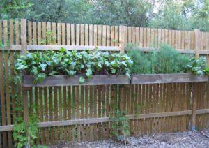 огород во дворе