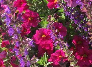 как сочетаются цветы на клумбе