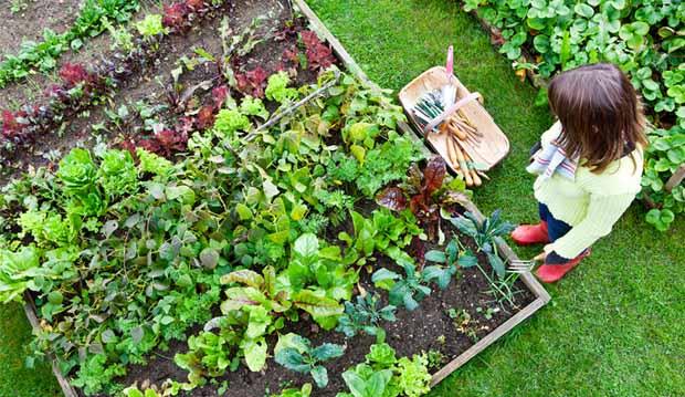 Что не надо делать на огороде: 10 ошибок
