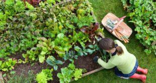 Что не надо делать на огороде