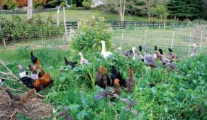 Что не надо делать на огороде ошибки