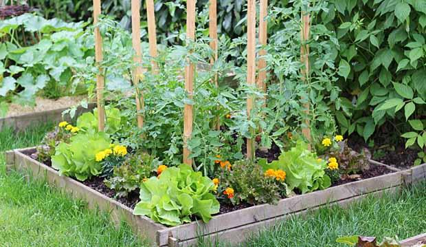 10 ошибок Что не надо делать на огороде