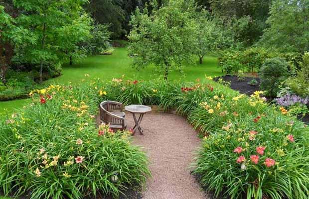 как красиво посадить лилейник в саду