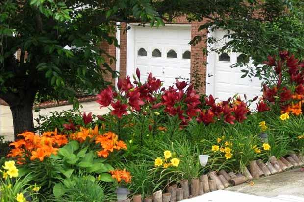 где посадить лилии в саду