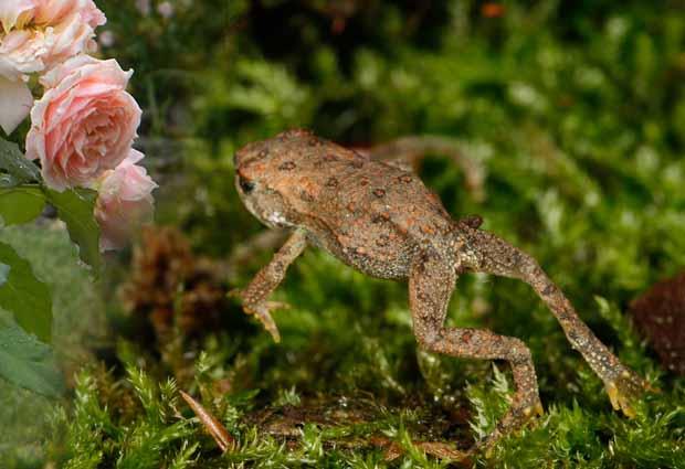 Как бороться с тлей на розах