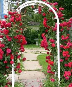 арка из красных роз в саду