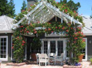 розы возле дома