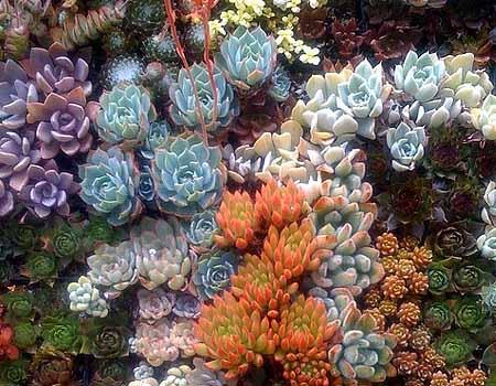 Композиции из цветов суккулентов в саду