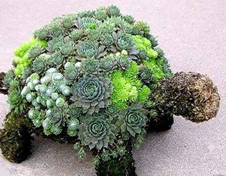 очиток и молодило в садовой композиции из цветов Черепаха