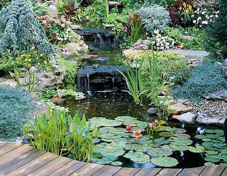 красивый пруд на даче