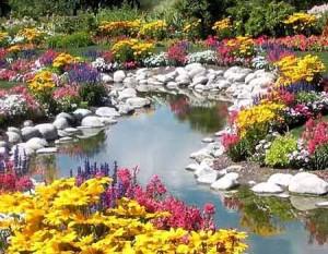 цветочный пруд на даче фото