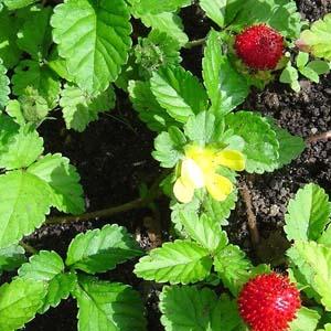 необычные неприхотливые растения для цветника