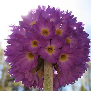 цветы для цветника на даче