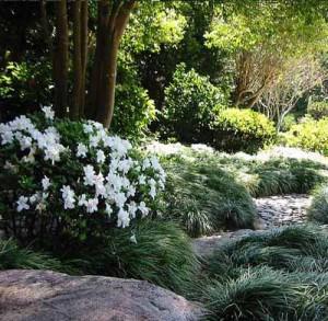 белые акценты в ланшафте тенистого сада