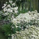 примеры ландшафтного дизайна в белом цвете