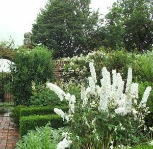 белые акценты в саду