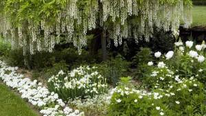 красивый ландшафтный дизайн белого сада