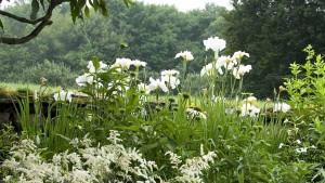 красота белого сада
