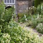 белый сад около дома