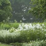 белый сад утром