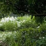 красивый белый сад в деревенском стиле