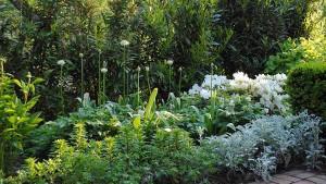 белые цветы в оформлении клумб