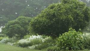 ландшафтный дизайн белого сада фото