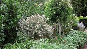 фото сада с белыми кус тарниками