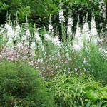 использование белых акцентов в оформлении сада своими руками
