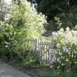 фото заборов с цветущими кустарниками