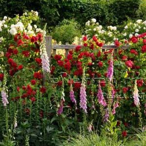 фото красивых заборов с цветами
