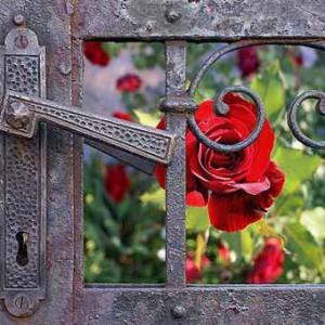 цветы и заборы фото