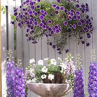 фото заборов с цветами в корзинах