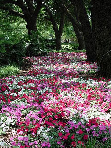 красивый дизайн сада своими руками-цветы