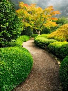 сезонный дизайн сада
