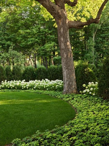 красивый дизайн сада своими руками-газон