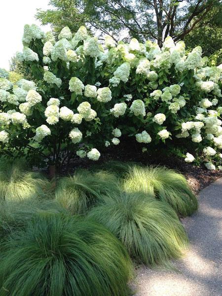 Красивый дизайн сада своими руками-кусты