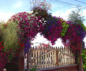 дачный укчасток цветы