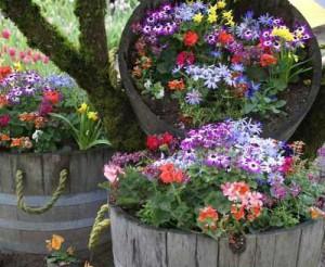 оформление дачного участка цветами