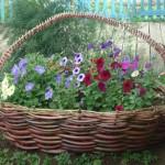 цветник с петуниями на даче