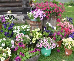 дачный участок цветник около дома
