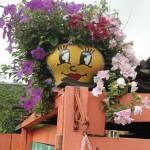 дачный участок фото клумб и цветников