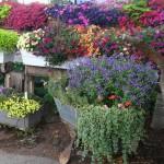 дачный участок ландшафтный дизайн цветников и клумб