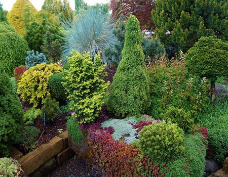 Хвойный садик с красивыми формами